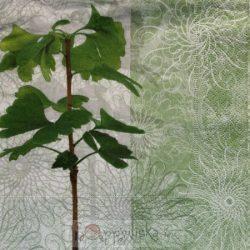 Növényes szalvéta