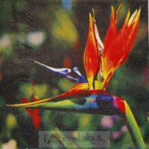 Virágfotós szalvéta